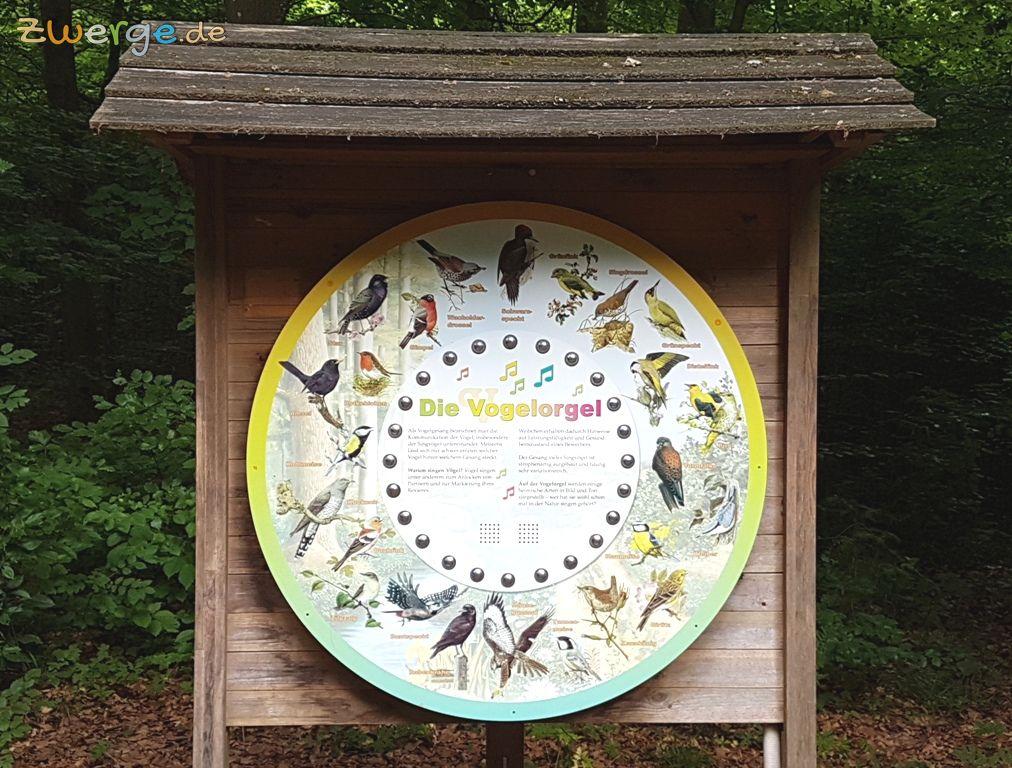 walderlebnispfad Heilbronn - Vogelorgel