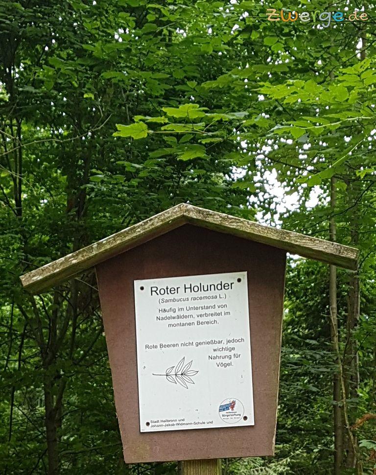 walderlebnispfad Heilbronn - Bäume